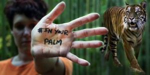 Tiger keeper Stacy Lupori supports the #InYourPalm campaign with Sumatran tiger Melati