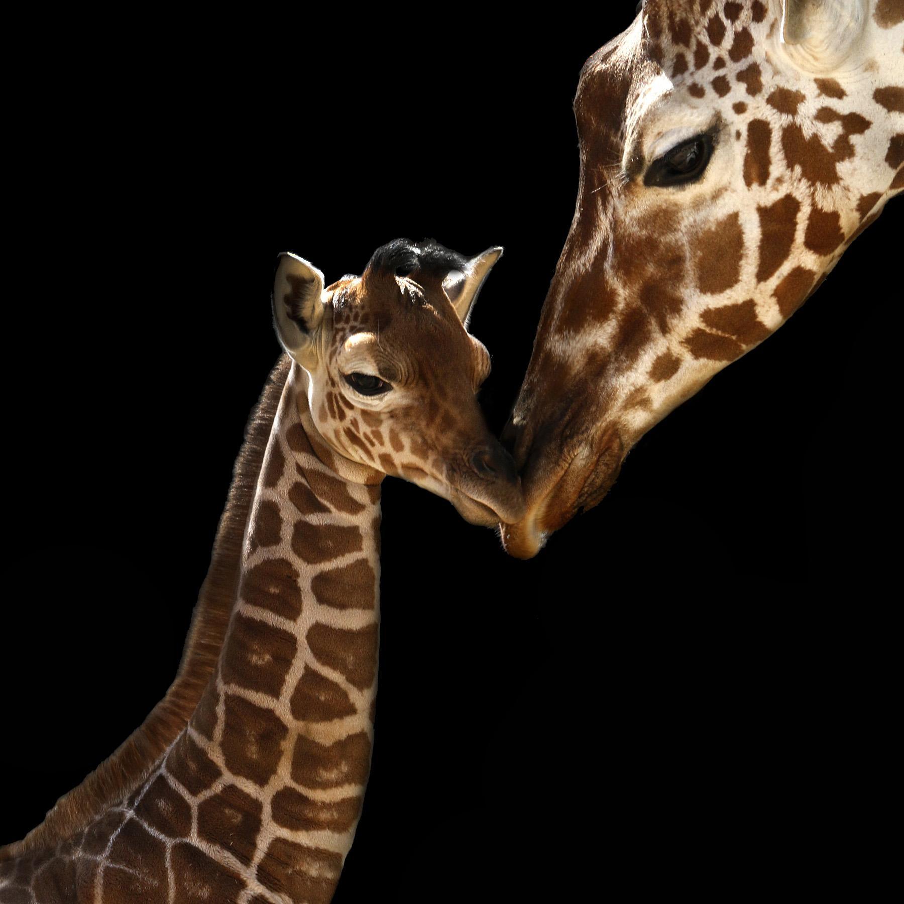 public gets to name dallas zoo u0027s baby giraffe dallas zoohoo