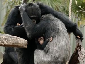 KC and Ramona hug with little Mshindi in between./Dallas Zoo