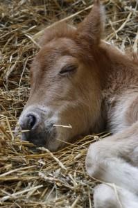 _MG_0270-Baby Pony (533x800)