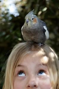 Photo 7_bird (533x800)