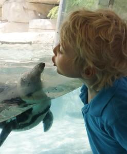 _MG_1497-Little boy kisses penguin through glass-CB LJ