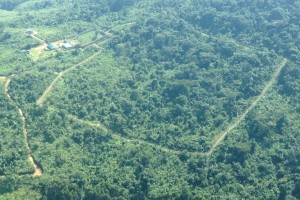 Ariel view of GRACE's 24-acre protected forest enclosure.