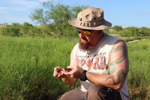 Dallas Zoo Reptile Supervisor Bradley Lawrence collects Texas horned lizards in the field.