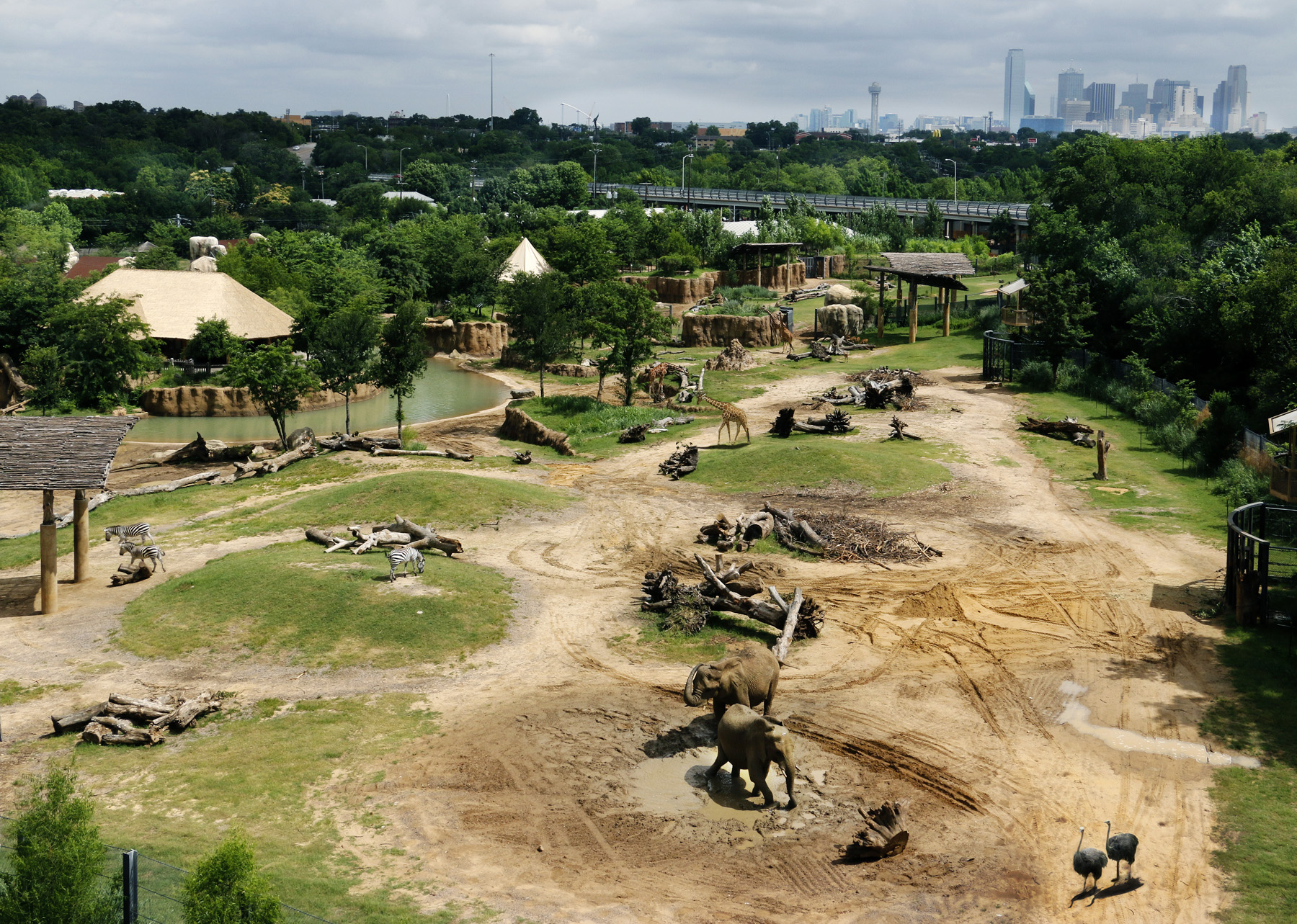 Dallas Zoo hopes to relocate elephants make room for rhinos in