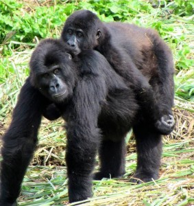 Four-year-old male Shamavu has a special connection with 10-year-old female Mapendo.