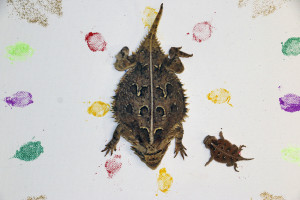 _MG_5018-horned lizard with painting