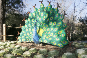 This eye-popping peacock is one of Kenney's largest sculptures he's designed.