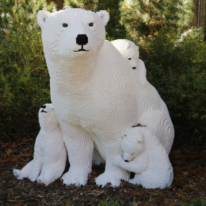 Kenney captured an endangered polar bear mom and cubs in a loving moment.