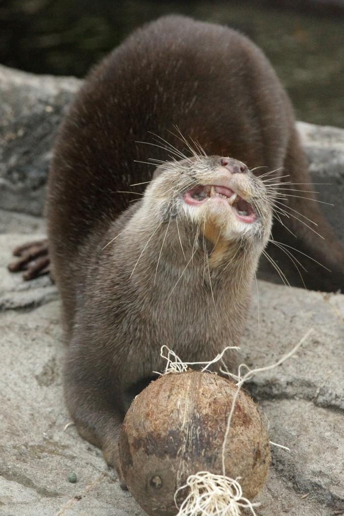 _MG_0055-Otter-CB