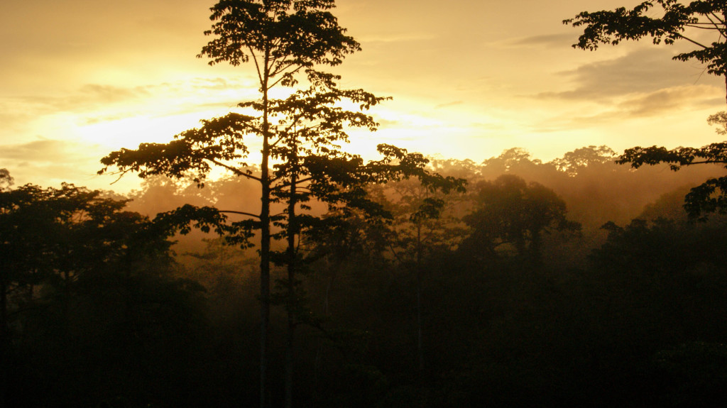 Lisa's fieldwork focused on dipterocarp trees, which create the iconic picture of the Bornean rainforest.