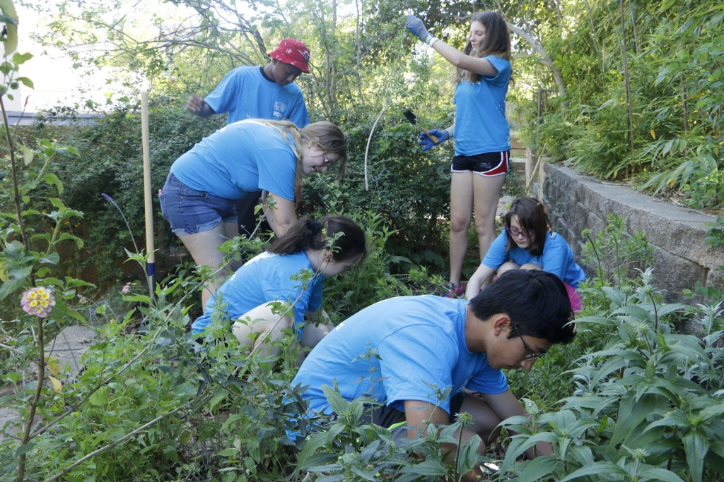 The Zoo Corps teens installed a pollination garden in the Children's Zoo.