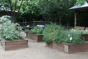 Composting turns lunch scraps into lush, green gardens.