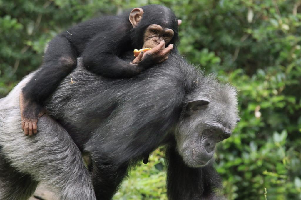 _MG_0019-Mshindi on Ramona's back-CB
