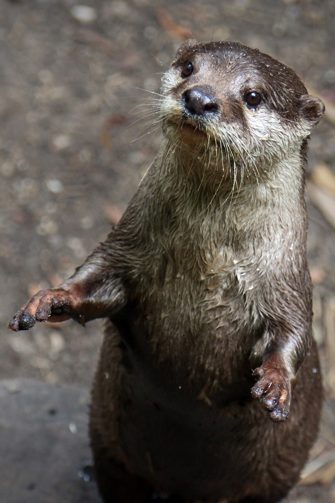 zoo vocabulary lesson stationing or how to ask an otter to sit