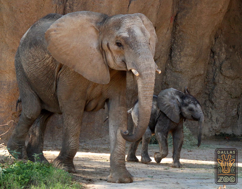 img_5224-ajabu-mlilo-elephant-w-logo-cs