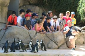 These campers got to meet penguins up close!