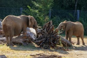 Kamba and Amahle share a moment by a root ball.