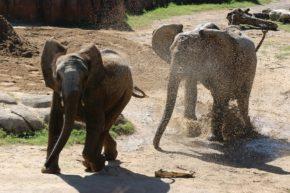 Zola chases Amahle through the mud.