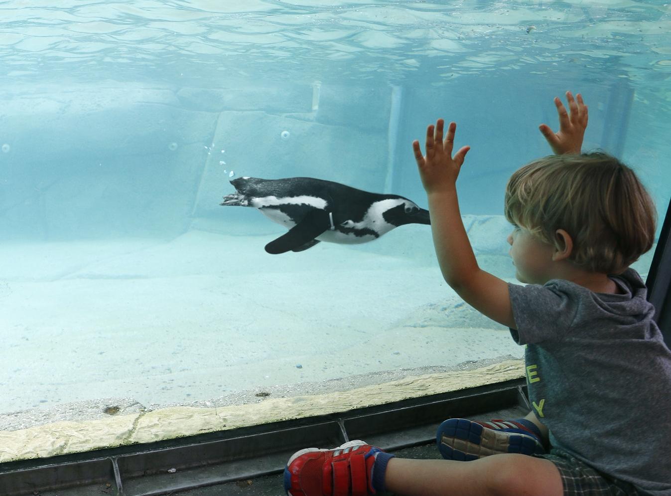 _MG_0033-Little boy at penguins-CB
