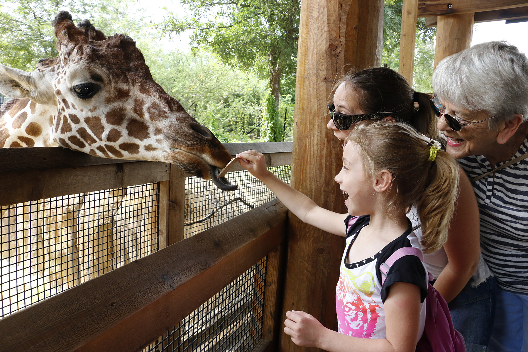 _MG_1606-giraffe feeding-visitors-CB