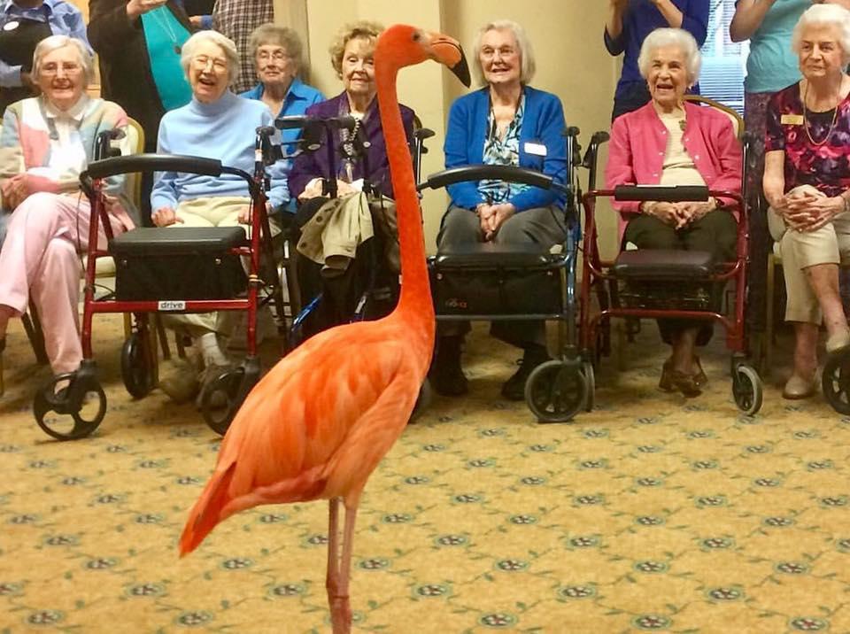 flamingos and elderly